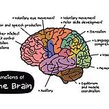 ezgif 5 28b948130f4a - Autoimmune Encephalitis Handouts and Fact Sheets