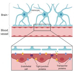 PNK Sleep and BBB 300x290 - Autoimmune Encephalitis Handouts and Fact Sheets