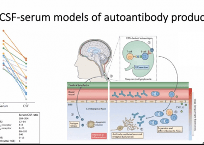 csf serum models of autoantibody production pathophysiology of AE 400x284 - Autoimmune Encephalitis